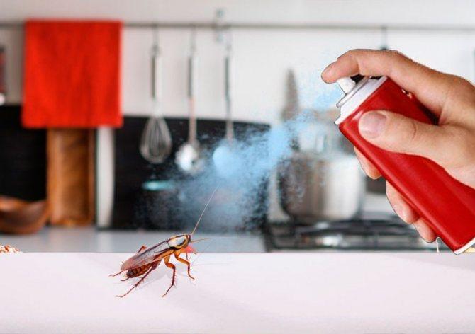 пръскания за хлебарки